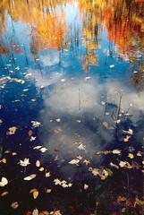 Leaves on Water