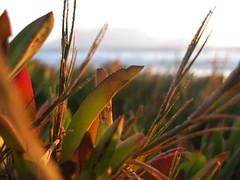 Blouberg Sunset (fuelspin) Tags: orange sun plant boat sand waves windy son capetown skip tilt shining freight blouberg vetplant kaap branders sononder skepe golwe