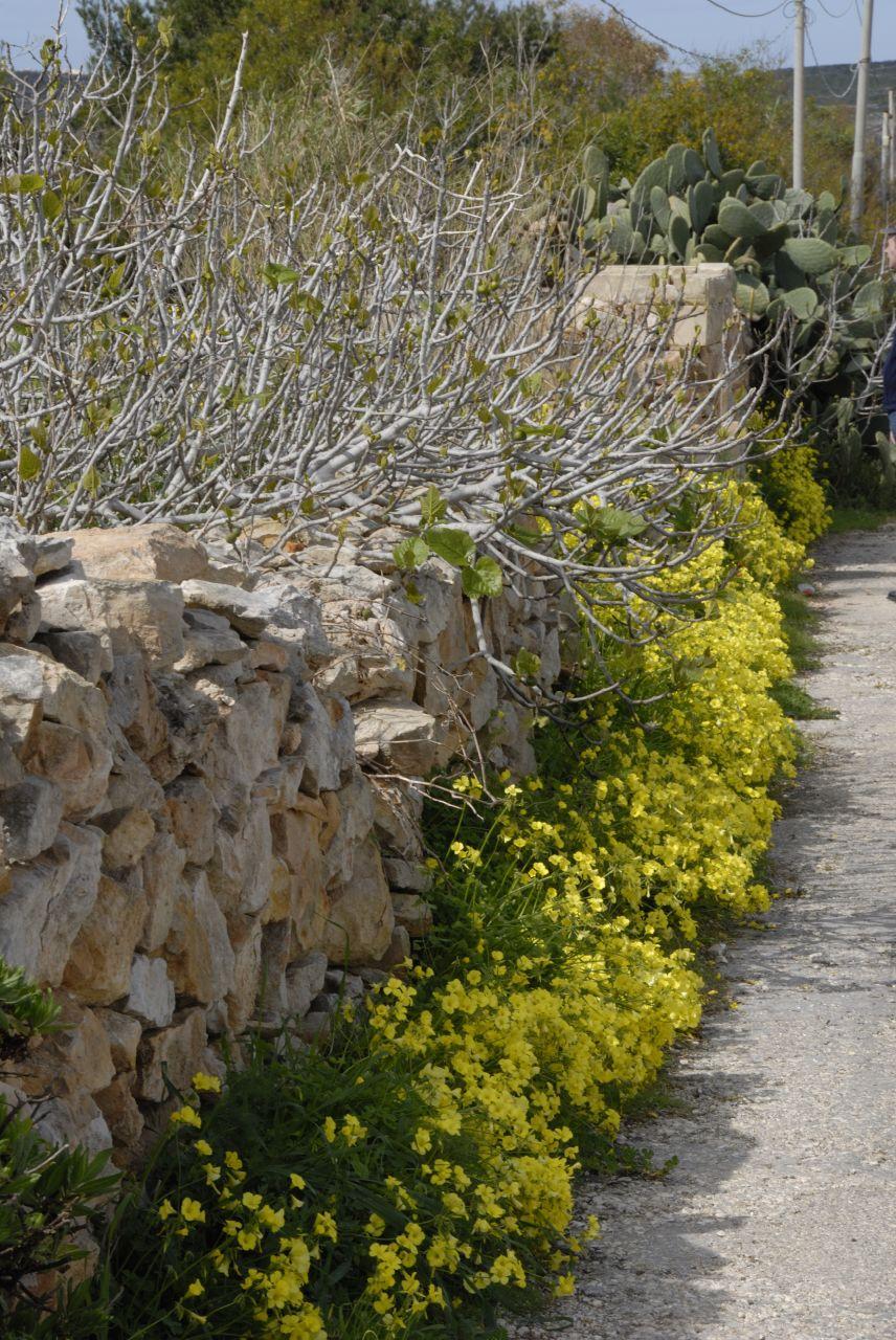 Spring in Malta!