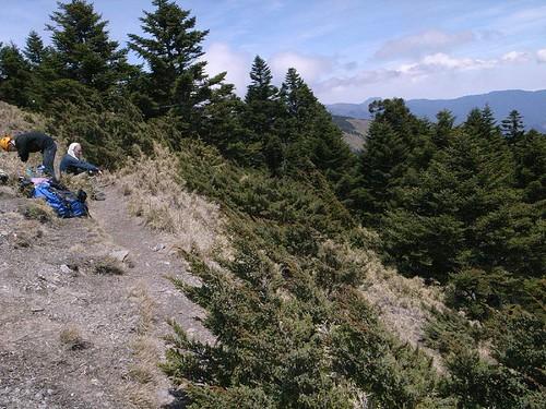 3448山頭下切森林點