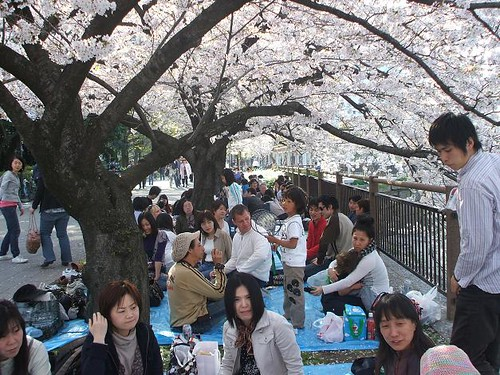2008 Hanami at Osakajo
