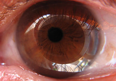 Kamera - Auge (Batikart ... handicapped ... sorry for no comments) Tags: camera iris brown macro reflection eye canon view eyelash braun makro 2008 spiegelung auge blick pupil canonpowershot a610 wimper pupille 610 canonpowershota610 viewonblack batikart viewkamera