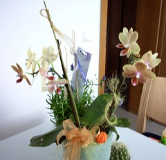 Orchideenblüte und Lavendel