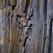 Orgues basaltiques sur le Lignon - Jaujac Ardèche / Patrick Boit photographe Valence Drôme
