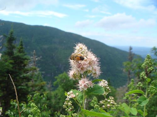 2008.07.12 Vermont 073