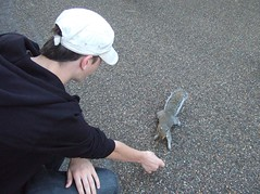 Hyde Park squirrel (Iris_14) Tags: squirrel cureuil