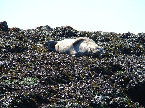 2008-08-03 Chain Islands 515
