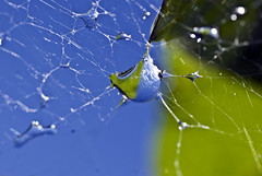 drop of water in spiders net