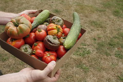 (robyncarliss) Tags: tomato cucumber tomatoes cucumbers heirloomtomatoes heirloomtomato