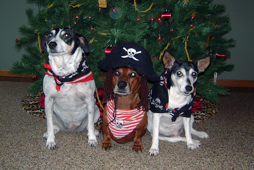 2007-12-05 - A Band of Doggie Pirates - 0012 [Gina 4x6]