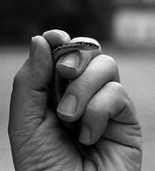 Snake #1 (Peter_Cameron) Tags: hp5 f4 1500s id1111 nikonf4s afnikkor352d
