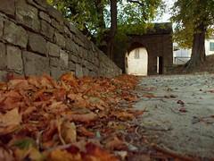 ...verso l'autunno (Darth Ronin) Tags: old red italy verde green nature ancient italia natura medieval piemonte age middle cuneo rosso castello prato antico medievale castel medioevo prunetto