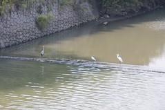 街崎川の鳥たち
