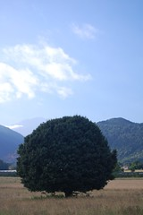 Ore - Pyrenees - arbre
