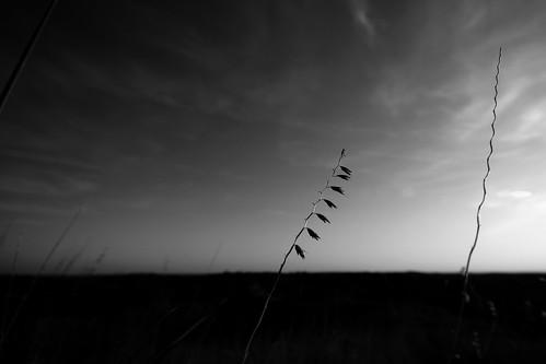 Landscape Minimalism