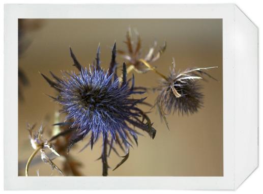 fleurs_02