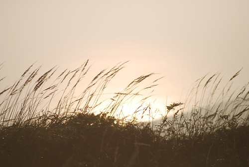 Autumn grasses