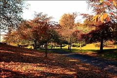 autumn strolling (Al JC) Tags: autumn leaves gold scotland fife walk stroll dunfermline anawesomeshot aplusphoto