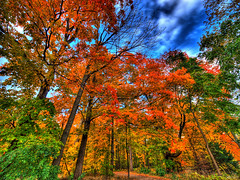 autumn falls... (paul bica) Tags: pictures park autumn trees sky hot color colour art fall colors beautiful beauty clouds digital photoshop outdoors photography photo yahoo google amazing graphics pix exposure flickr colours image photos pages pics path top picture pic