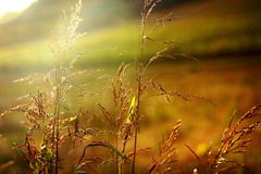 Summer to Fall (www.jonSpotphotography.com) Tags: sunset brown sun fall nature field yellow gold golden poetry poem tn knoxville tennessee fallcolors wheat meadow sunny evolution knoxvilletn naturesfinest naturephoto fallpictures hbw mywinners fallpicture jonspot fromsummertofall happybokehwednesday wwwjonspotphotography