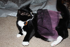 Vera's Halloween Costume (yamamymay) Tags: cat halloweencostume