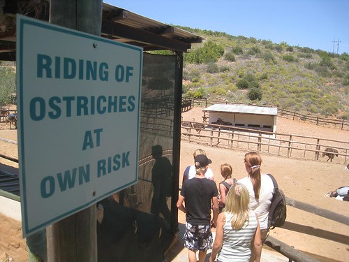 Riders...to your ostrich!