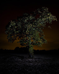 (Sam,) Tags: camera autumn light sky orange black tree green leaves night dark landscape one interesting looking wizard earth flash small artificial off pollution single pocket samellisphotography