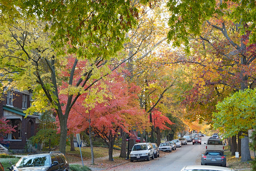 Fall colors - street