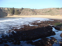 MartinsBeach_2007-011 (Martins Beach, California, United States) Photo