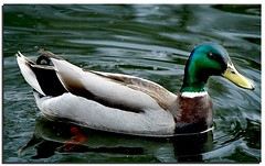 Ducking about (Mike926.) Tags: canon manchester amazing sale greatshot waterpark freephotos mikederby