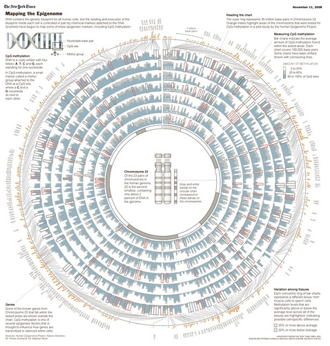 The New York Times > Science > Image > Mapping the Epigenome_1226666579818