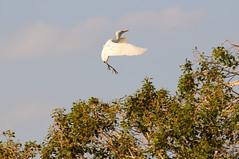 Suspended (PhotoGizmo) Tags: africa birds zambeziriver photogizmo yellowbilledheron