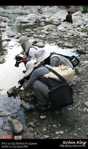 你拍攝的 20081115數位攝影_阿里山之旅346.jpg。