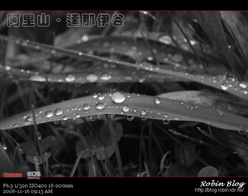 你拍攝的 20081116數位攝影_阿里山之旅207.jpg。