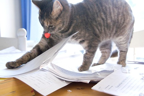 """Tabitha """"helps"""" with marking"""