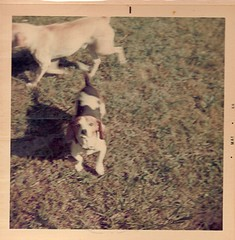 albea31 (Valerie's Genealogy Photos) Tags: old dogs vintage scan genealogy 1960s familyphotos oldphotos oldfamilyphotos albea albeafamily