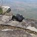 Spidey on the edge. Lushoto, Tanzania 24OCT08