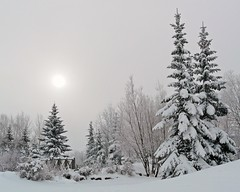Peace on Earth (njchow82) Tags: trees winter snow canada cold calgary landscape december peace scenic calm alberta 2008 stillness soe blueribbonwinner inspiredbylove specnature beautifulexpression tranquitiy anawesomeshot impressedbeauty naturewatcher dmcfz18 rubyphotographer flickrlovers naturallymagnificent vosplusbellesphotos naturescreations njchow82 thecelebrationoflife mindigtopponalwaysontop earthnaturelife