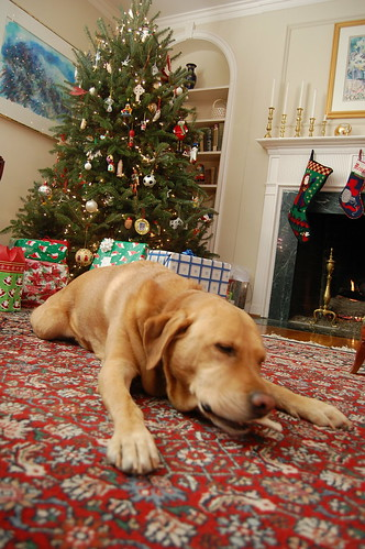 henry and christmas tree - christmas 2008