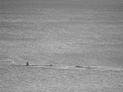 DSCF0895_1 (Stinky Cha Cha Bingo) Tags: whale loungeroom lorne