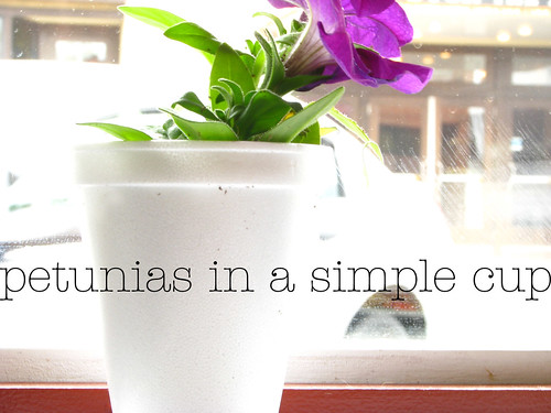 petunias in a cup