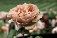 第13回国際バラとガーデニングショウ