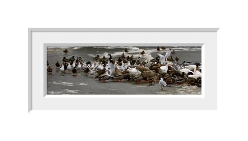 Duck, Duck, Duck, Goose
