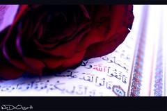 ,,,,, (Weda3eah*) Tags: red rose by book words quran weda3eah