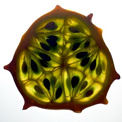 Horned Melon Cross Section (Samer Farha) Tags: orange macro green flickr slice dcist crosssection samer hornedmelon farha farhafotocom img069620080406