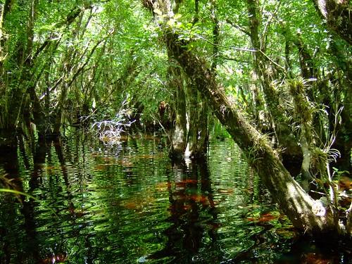 fishing little slough garden 4-27-08 018