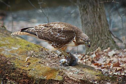 Hawk Dining