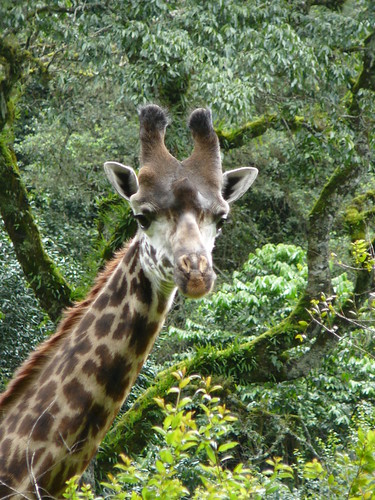Safari caminando Arusha Park