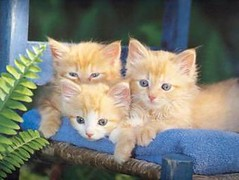 These pictures of cats brought to you by www.cats-tell.com (valkoted) Tags: pet cats pets funnycats catpictures picturesofcats cutecatpictures catstellcom funnypicturesofcats
