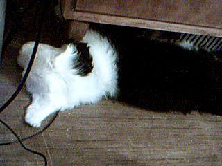 Työpöydän alla